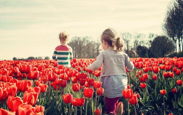 ninas-campo-tulipanes